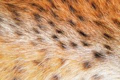 Beschaffenheit beschmutzter Pelz des wilden Tieres Lizenzfreies Stockfoto