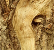 Beschaffenheit der alten bunten Baumrinde Stockbilder
