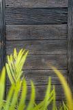 Beschaffenheit der alten Planke Stockfotos