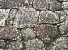 Beschaffenheit der alten Steinwand bedeckte grünes Moos Lizenzfreies Stockbild