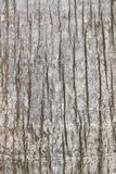 Beschaffenheit der alten und abgenutzten Baumrinde Stockbilder