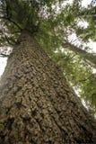 Beschaffenheit der Barke des Stammes eines alten Baums lizenzfreie stockfotos