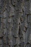 Beschaffenheit der Barke eines alten Baums Stockfotografie