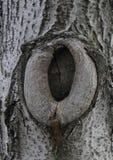 Beschaffenheit der Barke eines Baums Lizenzfreie Stockfotos
