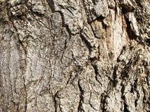 Beschaffenheit der Barke eines Baums lizenzfreies stockbild
