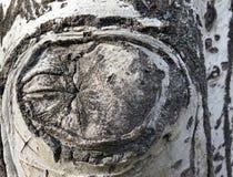 Beschaffenheit der Barke eines Baums lizenzfreie stockbilder
