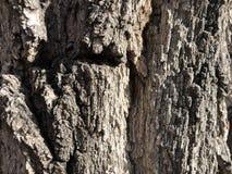 Beschaffenheit der Barke eines Baums stockfotos