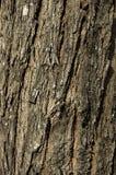 Beschaffenheit der Baumbarke Stockbilder