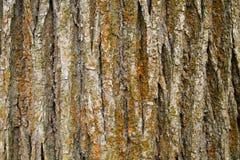 Beschaffenheit der Baumbarke Stockbild