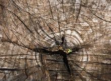 Beschaffenheit der Baumrinde Stockbild