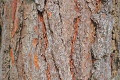 Beschaffenheit der Baumrinde Stockfotografie