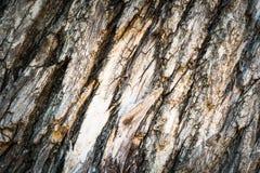 Beschaffenheit der Baumrindebeschaffenheit Stockbild