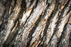 Beschaffenheit der Baumrindebeschaffenheit Lizenzfreie Stockfotografie