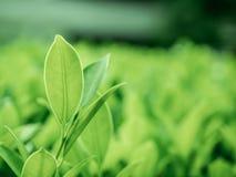 Beschaffenheit der Blattnahaufnahme auf grünem und dunklem Hintergrund Lizenzfreie Stockfotografie