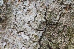 Beschaffenheit der braunen Barke eines Baums stockfotografie