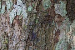 Beschaffenheit der braunen Barke eines Baums lizenzfreies stockfoto