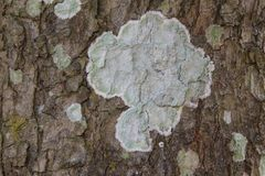Beschaffenheit der braunen Barke eines Baums stockbilder