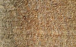 Beschaffenheit der braunen Baumrinde Lizenzfreie Stockfotos