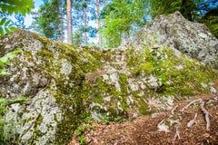 Beschaffenheit der Flechte und des Mooses auf dem alten Stein im Wald lizenzfreie stockfotos