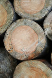Beschaffenheit der geschnittenen Bäume Stockfotos