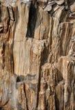 Beschaffenheit der Oberfläche des versteinerten Holzes Lizenzfreies Stockfoto
