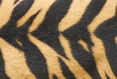 Beschaffenheit der realen Tigerhaut (Pelz) Lizenzfreies Stockbild