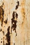 Beschaffenheit der weißen Wand mit Rost und Korrosion Stockfotos