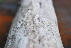 Beschaffenheit des alten Baums Stockfoto