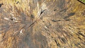 Beschaffenheit des alten Baumstumpfs mit Sprüngen Lizenzfreies Stockbild