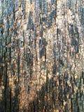 Beschaffenheit des alten Holzes für Hintergrund Lizenzfreie Stockbilder