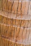 Beschaffenheit des Barken-Kokosnuss-Baums. Lizenzfreie Stockfotografie