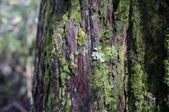 Beschaffenheit des Baum-Stammes mit Flechte und Moss Growing von ihr lizenzfreies stockbild