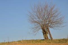 Beschaffenheit des Baums Stockfotos