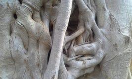 Beschaffenheit des Baums Stockfotografie