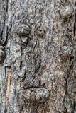 Beschaffenheit des Baumstammes Lizenzfreie Stockbilder
