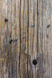 Beschaffenheit des Baumstammes Stockbild