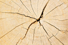 Beschaffenheit des Baumstumpfs Stockfoto