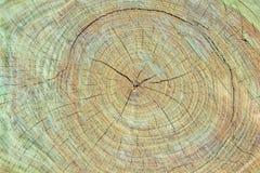 Beschaffenheit des Baumstumpfs lizenzfreies stockfoto