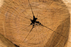 Beschaffenheit des Baumstumpfs Lizenzfreie Stockfotos