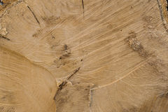 Beschaffenheit des Baumstumpfs Lizenzfreies Stockbild
