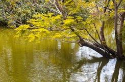 Beschaffenheit des Flusses mit einem Baum im Wasser lizenzfreie stockfotos