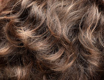 Beschaffenheit des gelockten Haares Stockfotografie