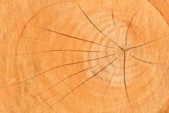 Beschaffenheit des gesägten Holzes Wachstumsringe Natürlicher hölzerner Hintergrund lizenzfreies stockfoto