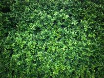 Beschaffenheit des grünen Blattes lizenzfreie stockfotografie
