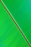Beschaffenheit des grünen Blattes Stockfoto