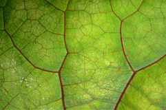 Beschaffenheit des grünen Blattes und der Adern Lizenzfreies Stockfoto