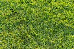 Beschaffenheit 1 des grünen Grases Lizenzfreie Stockfotografie