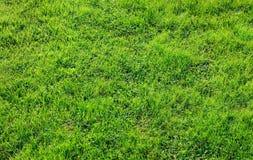 Beschaffenheit des grünen Grases Lizenzfreies Stockbild