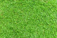 Beschaffenheit des grünen Grases Stockfoto