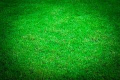 Beschaffenheit des grünen Grases Stockfotografie
